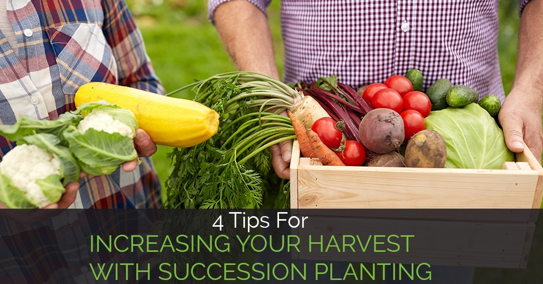 tips-for-increasing-harvest