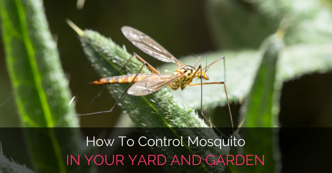 How To Control Mosquito In Your Yard And Garden - Garden Loka
